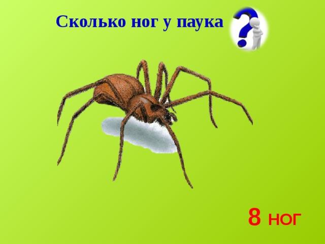 Ноги паукообразных – сколько пар конечностей имеют, ходильные ноги