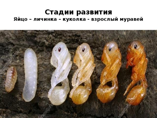 Как уничтожить яйца тараканов