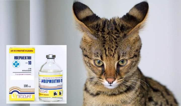 Лекарства для кошек от глистов — препараты, уколы и суспензии против паразитов