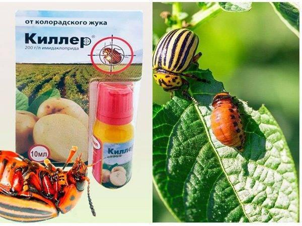 Табу от колорадского жука: инструкция по применению, вред для человека, отзывы