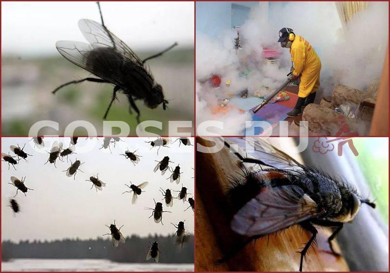 ᐉ средства от мух: ловушки, липкие ленты, отпугиватели, химические препараты, народные рецепты и другие - zoovet24.ru