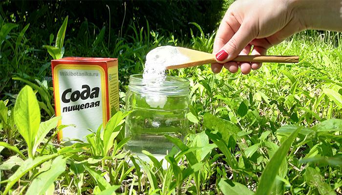 Как использовать соду от тли на деревьях и кустарниках