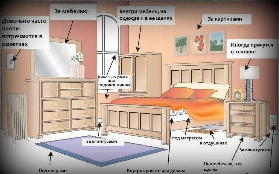 Постельные клопы: как избавиться в домашних условиях, чем можно вывести самостоятельно, что делать если завелись в диване русский фермер