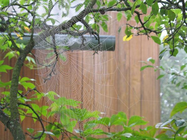 Как избавиться от ос на балконе: убрать осиное гнездо, чем отпугнуть