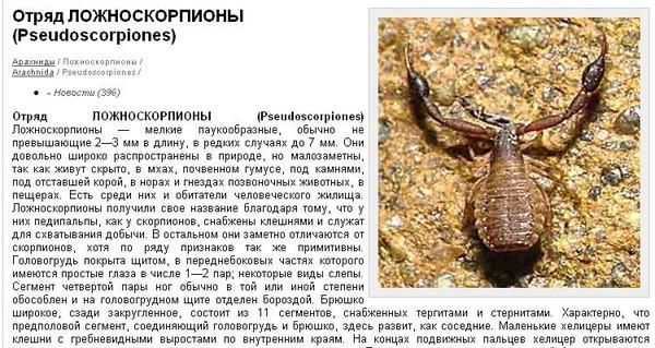 Злейший враг скорпиона: держитесь от него подальше