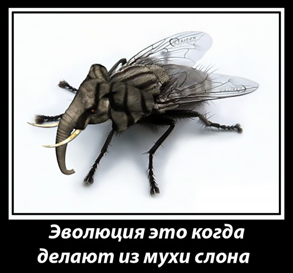 Откуда берутся мухи в квартире или доме?