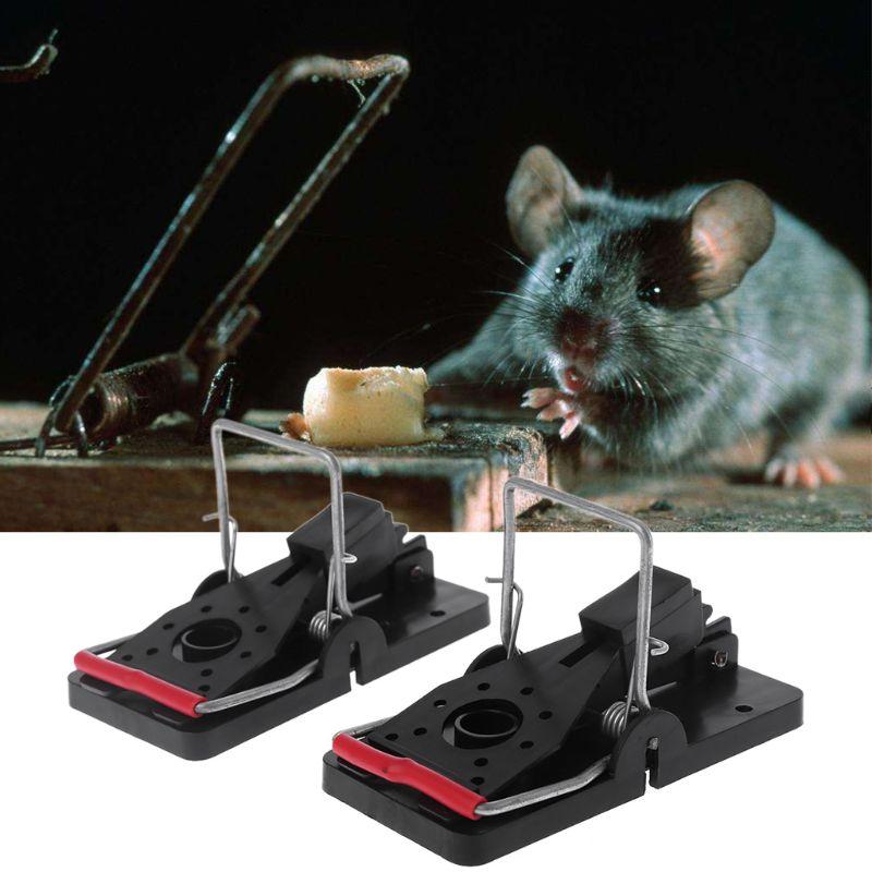 Лучшая приманка для крыс в крысоловку, что они больше любят?
