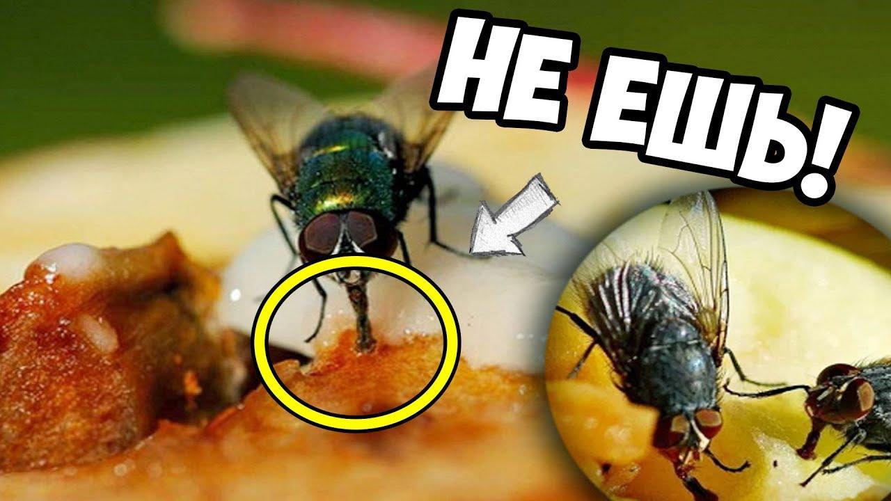 Что будет, если съесть яйца или личинки мухи. что будет, если съесть яйца или личинки мухи яйца мухи на продуктах