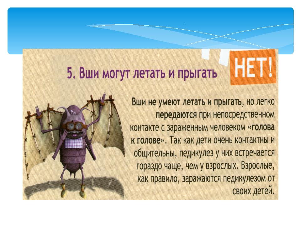 5 мифов о вшах — летают ли она, как быстро бегают, могут ли их гниды прыгать?