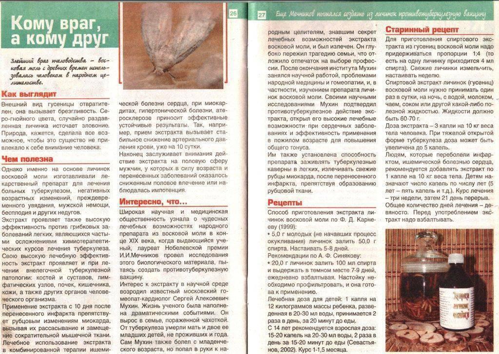 Восковая моль — применение в народной медицине