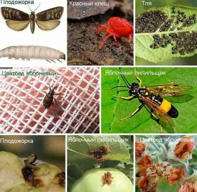 Самые распространенные насекомые-вредители сада и огорода