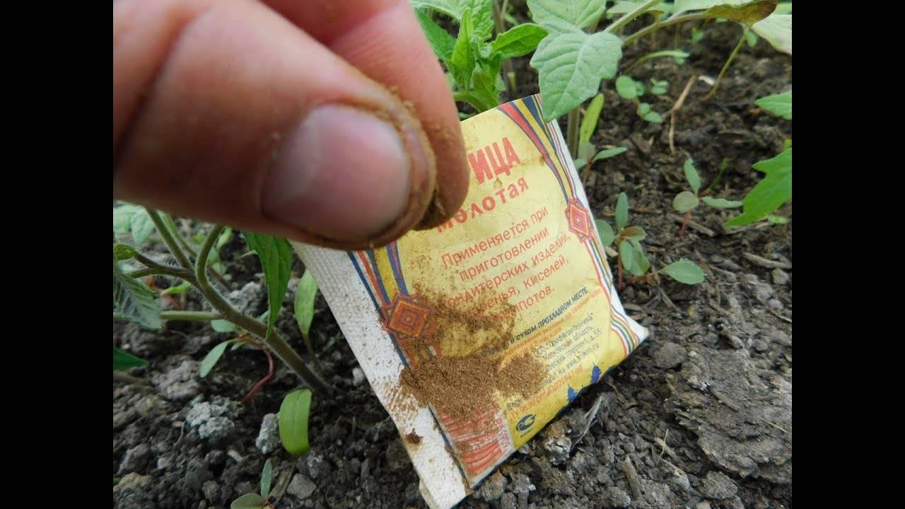 Как бороться с муравьями в теплице и избавиться от насекомых