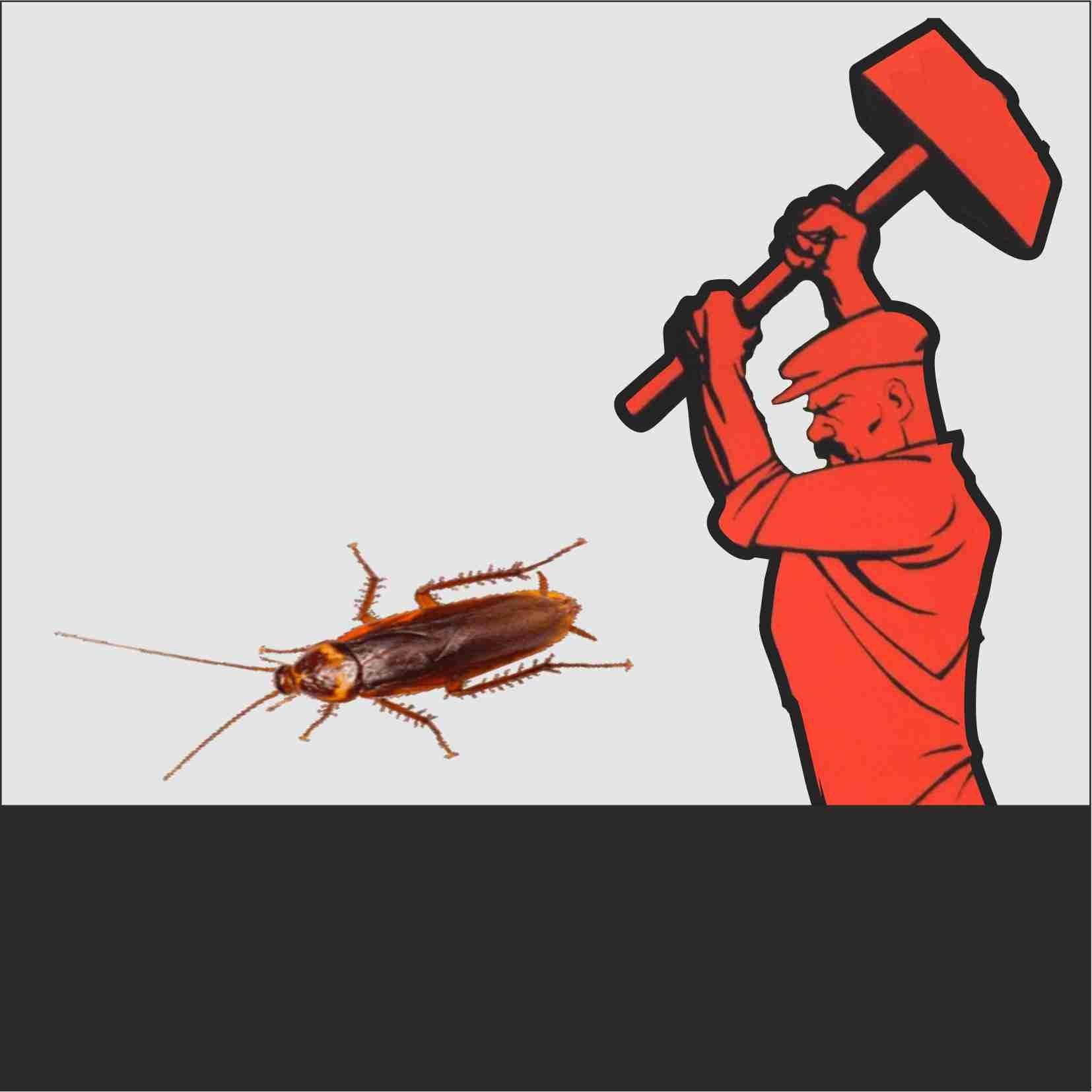 Основные средства борьбы с тараканами в общежитии