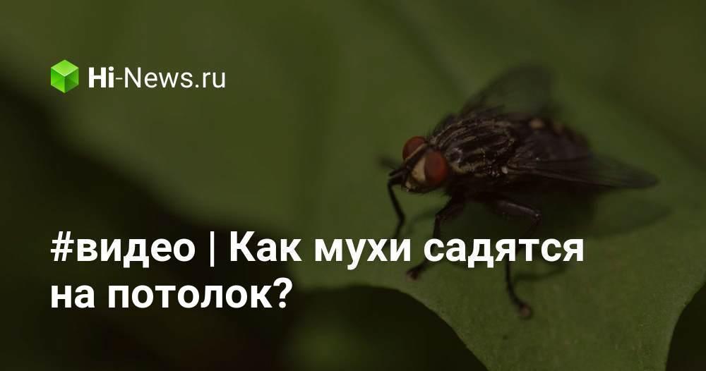 Как муха садится и держится на потолок, почему не падает?