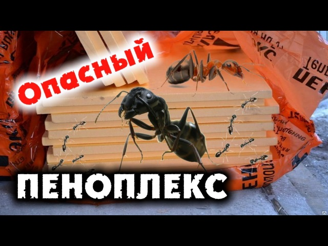 Пеноплекс и муравьи как бороться