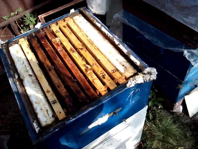 Обработка пчел бипином: как и когда обрабатывать?