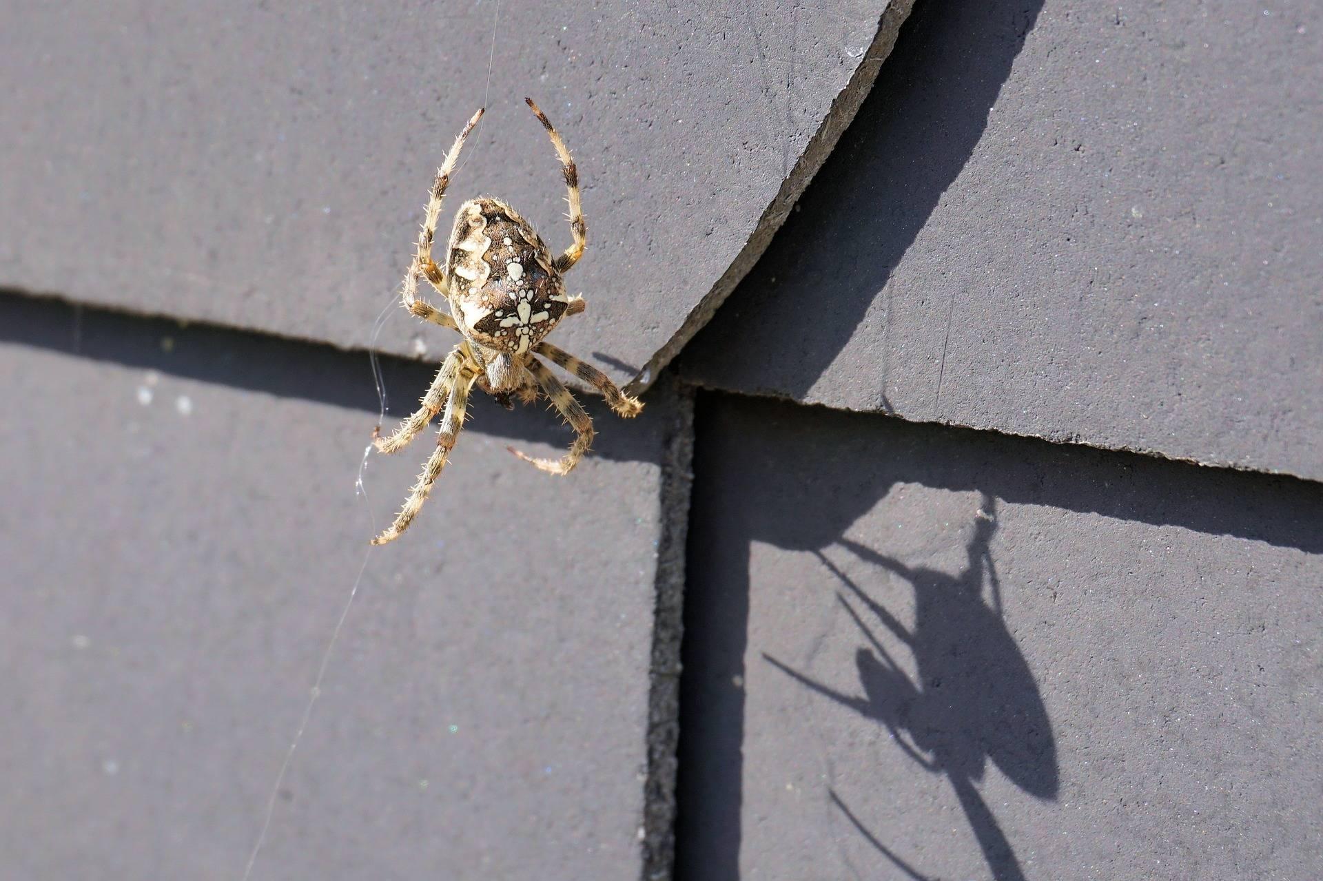 Как избавиться от пауков: в доме, на даче, на участке, обзор вариантов действий, химических препаратов, отпугивателей и народных средств, а также перечень методов, которые не работают