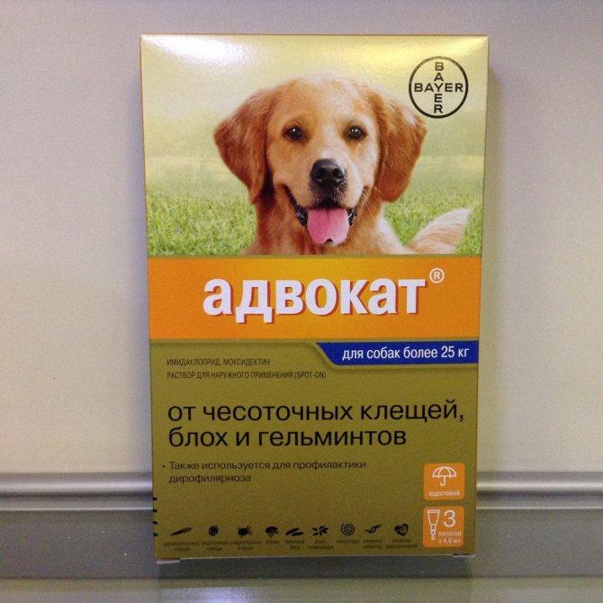 Адвокат для собак
