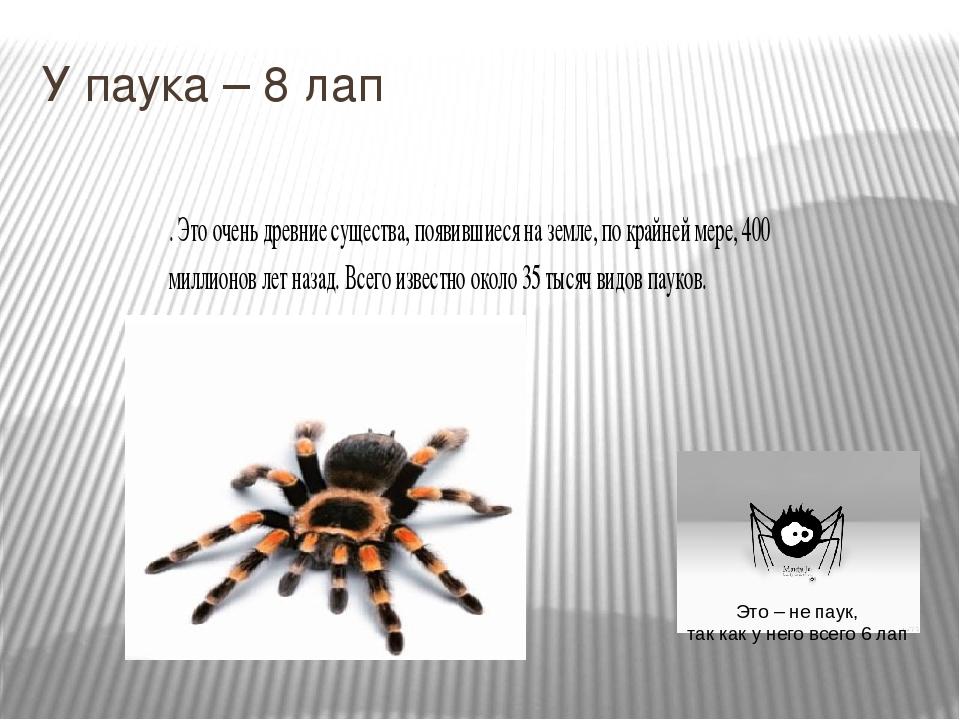 Сколько ног у паука и почему всё не так однозначно: обобщенный взгляд
