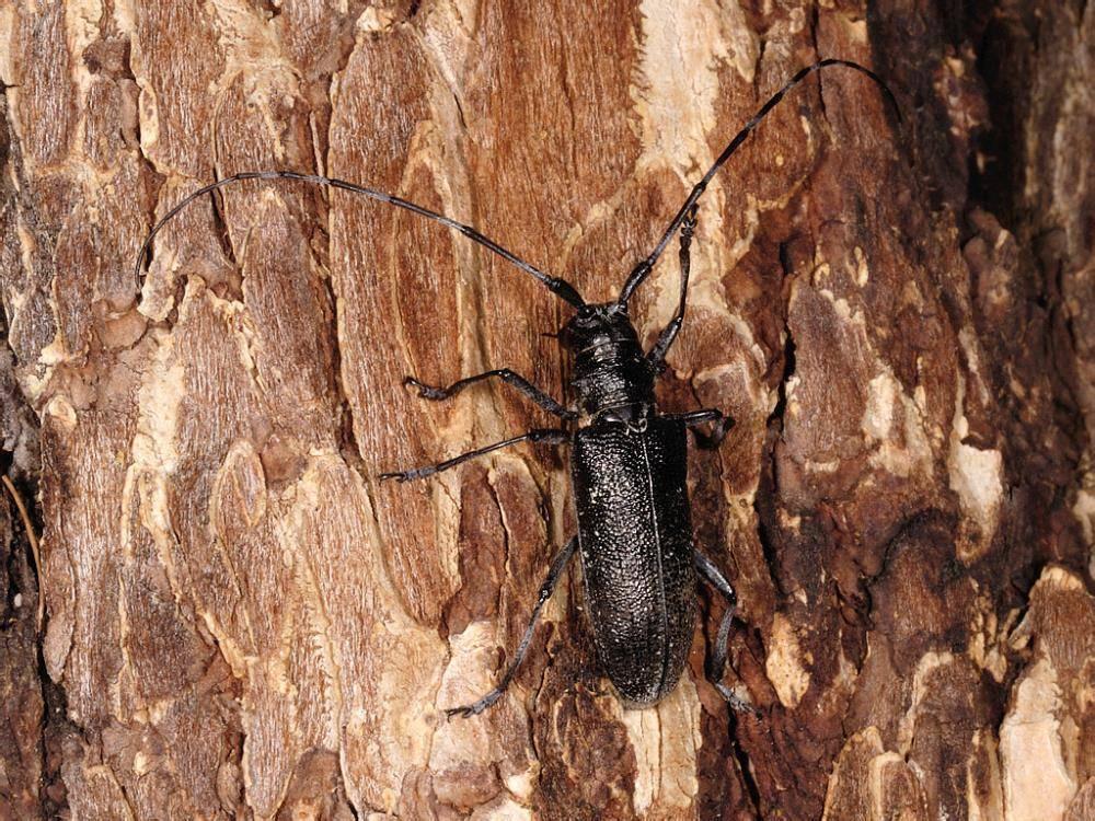 Лучшие методы борьбы с жуком-короедом в домашних условиях