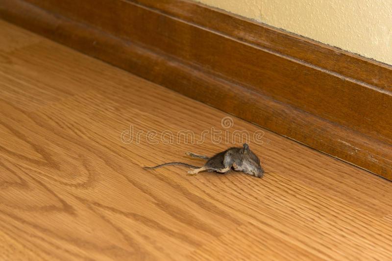 Как избавиться от мышей - wikihow
