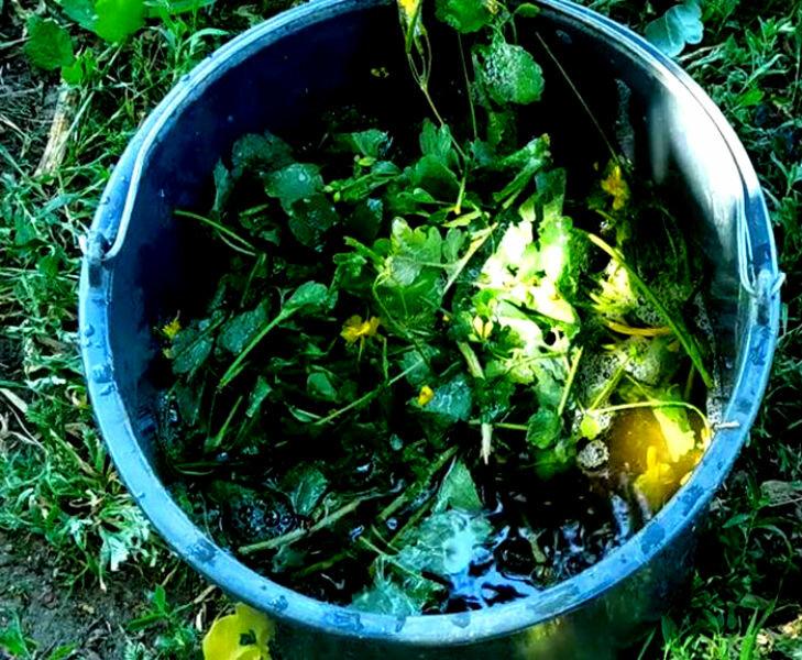 Растение чистотел: чем полезен, где и как использовать в саду