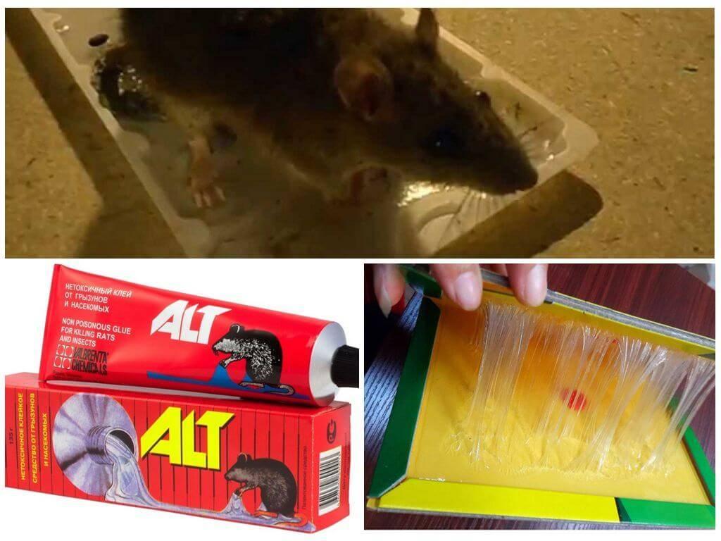 Как очистить кота от клея для мышей