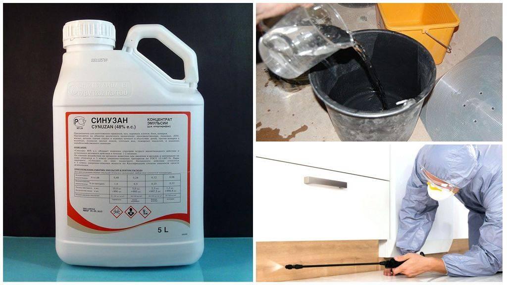 5 средств профессиональной дезинфекции от клопов в квартире: обработка, эффективность