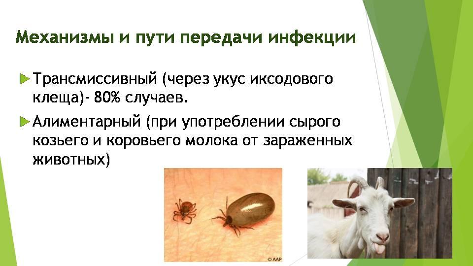 Козы и клещевой энцефалит. когда можно пить молоко, если корову укусил клещ? козу укусил клещ можно ли пить молоко