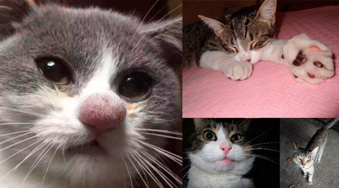 Как оказать первую помощь, если кошку укусила оса?