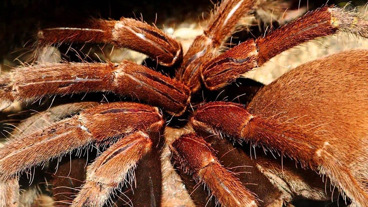 Топ 10 самые красивые пауки в мире - лучшие топ 10