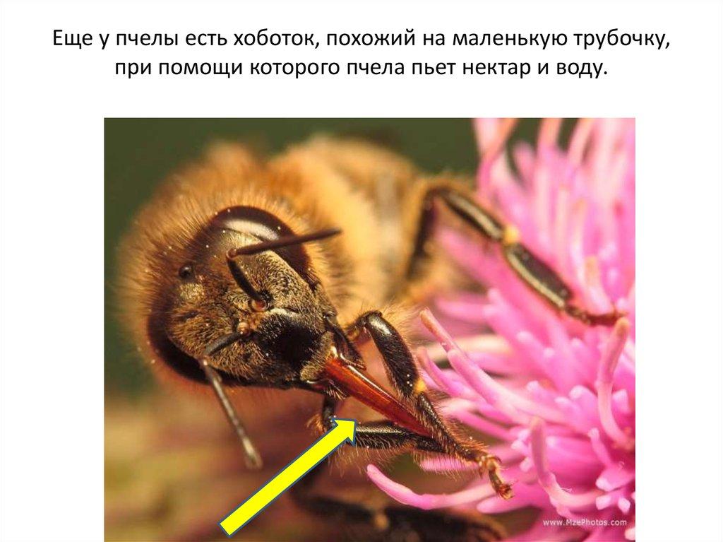5 фактов о пчелах   интернет-журнал factinteres