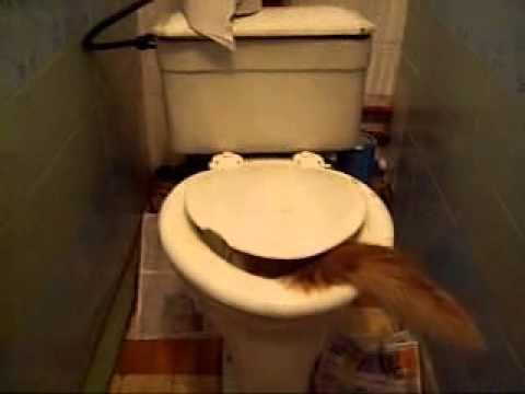 Крыса в канализации как избавиться: крысы в канализационных трубах