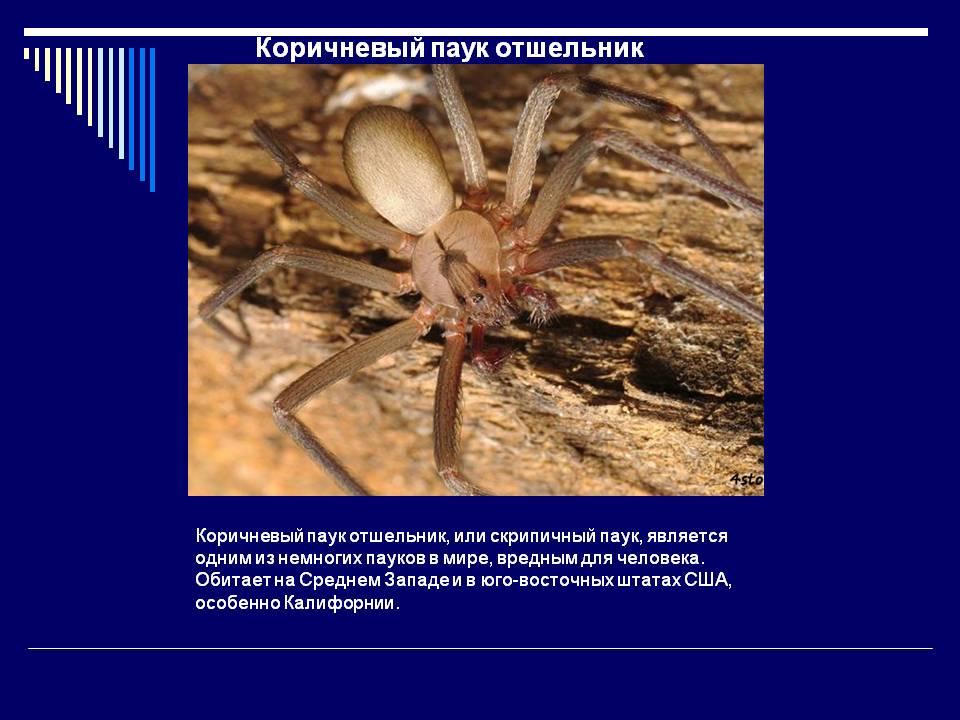 Укус паука как выглядит. симптомы и первая помощь при укусе паука.