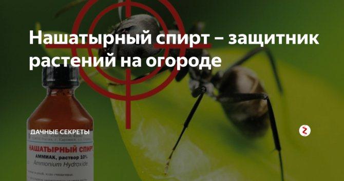 Нашатырный спирт от тли