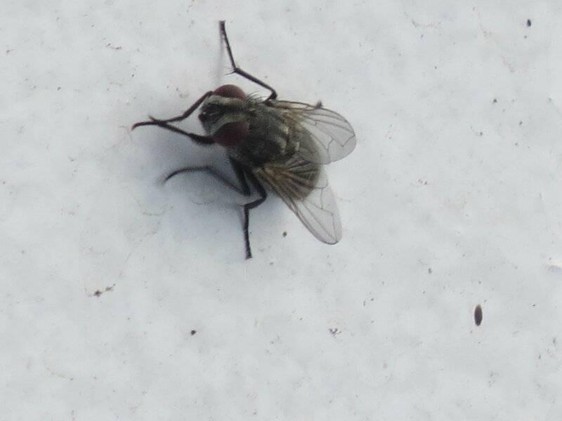Почему мухи сидят на потолке