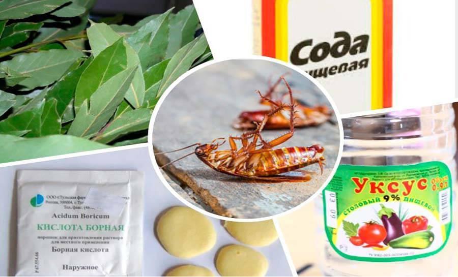 Боятся ли тараканы соли. так что не любят тараканы - бытовые средства. преимущества и недостатки борной кислоты.