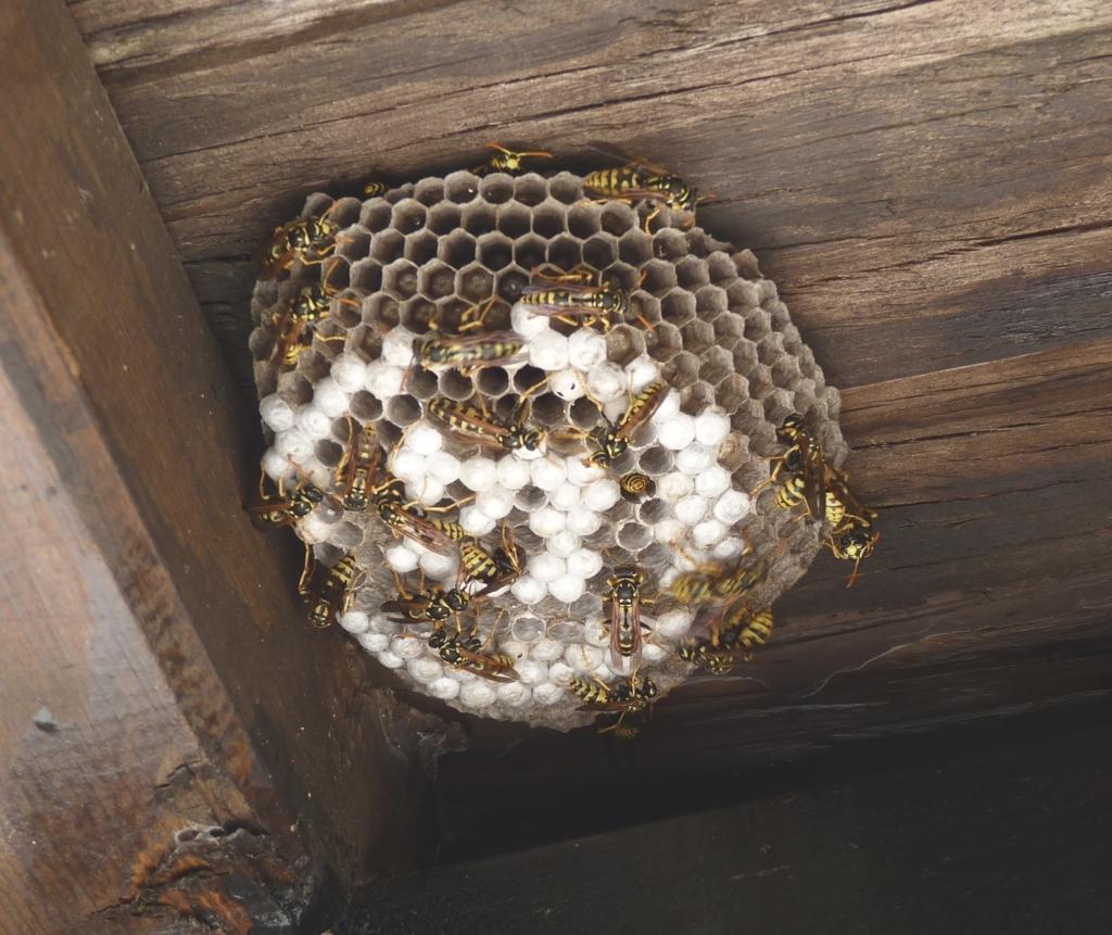 Осиные гнезда при при артрите, ревматизме и не только