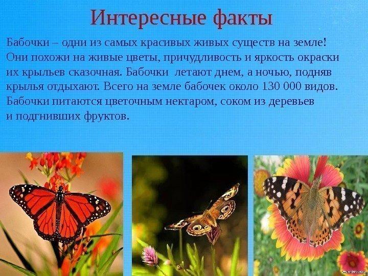Как появляются бабочки?