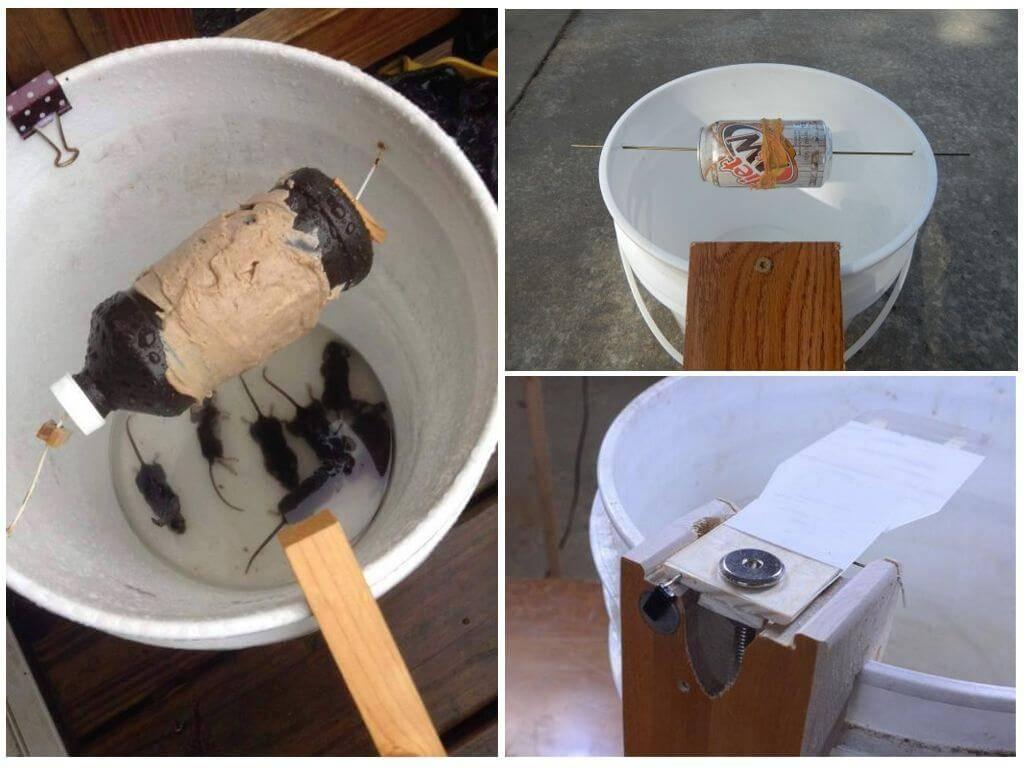 Как поймать мышь в домашних условиях быстро и без мышеловки?