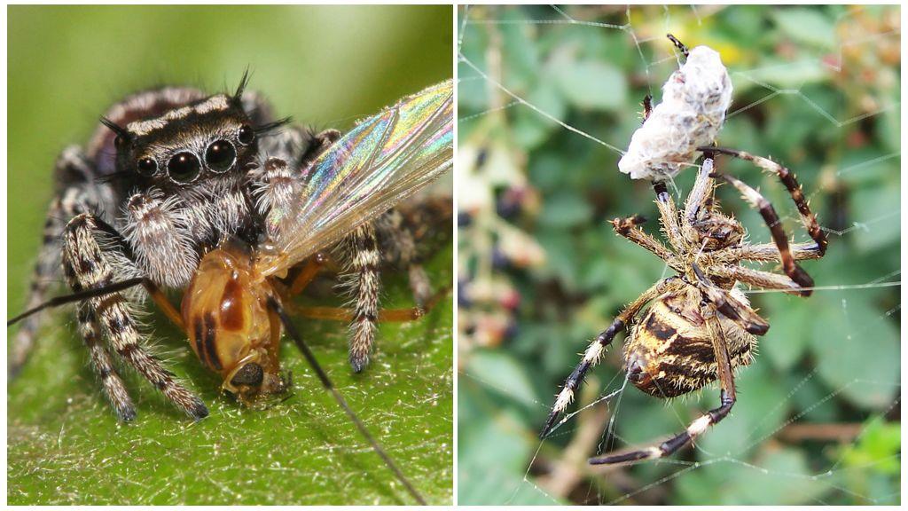 Пчелиные вредители и враги | кто ест пчел, птицы, шершни, осы