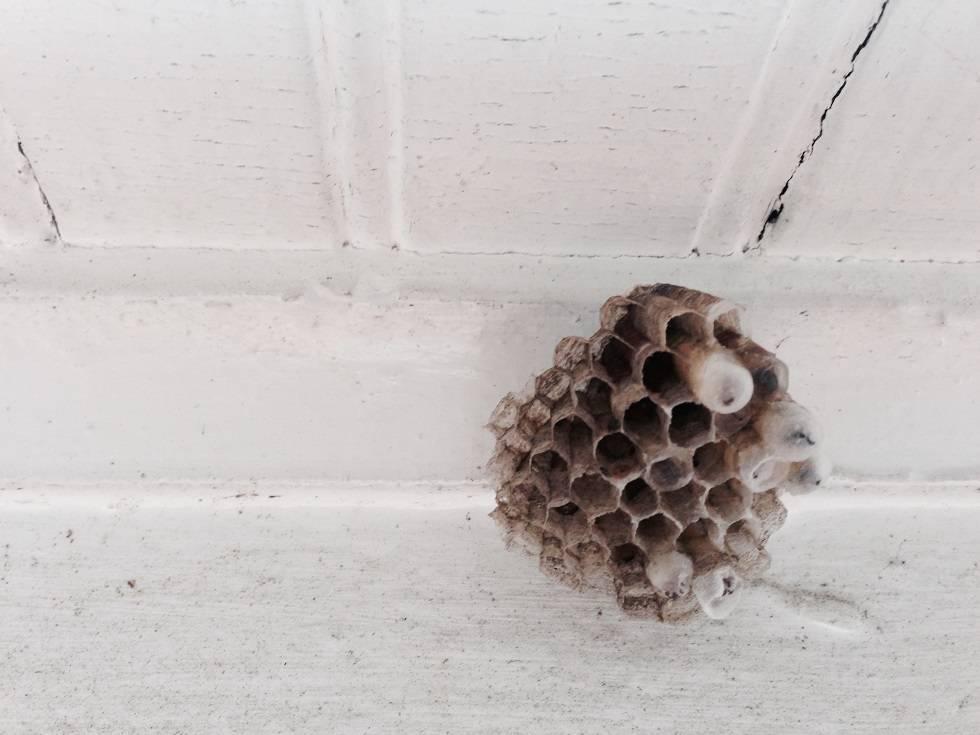 Как избавиться от осиного гнезда на балконе: эффективные методы и средства