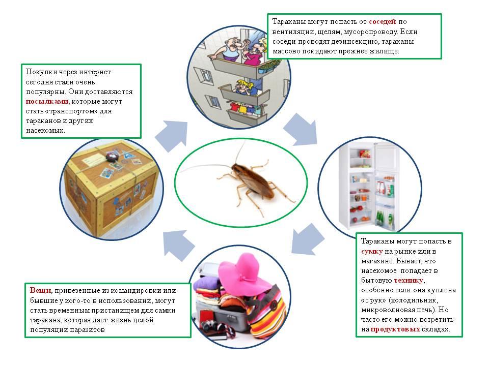 От чего и откуда берутся тараканы в квартире и доме