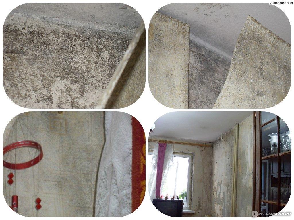 Как использовать медный купорос против грибка и плесени на стенах помещений