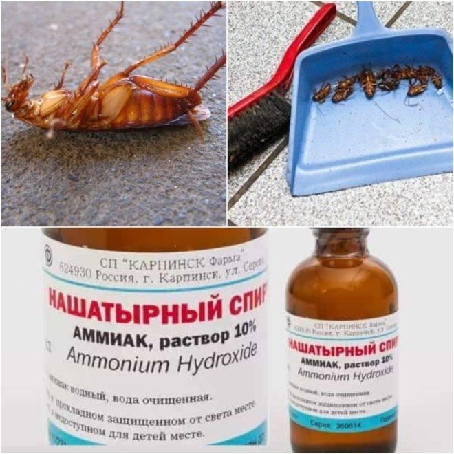 Нашатырный спирт от тараканов в квартире: как развести и использовать, советы