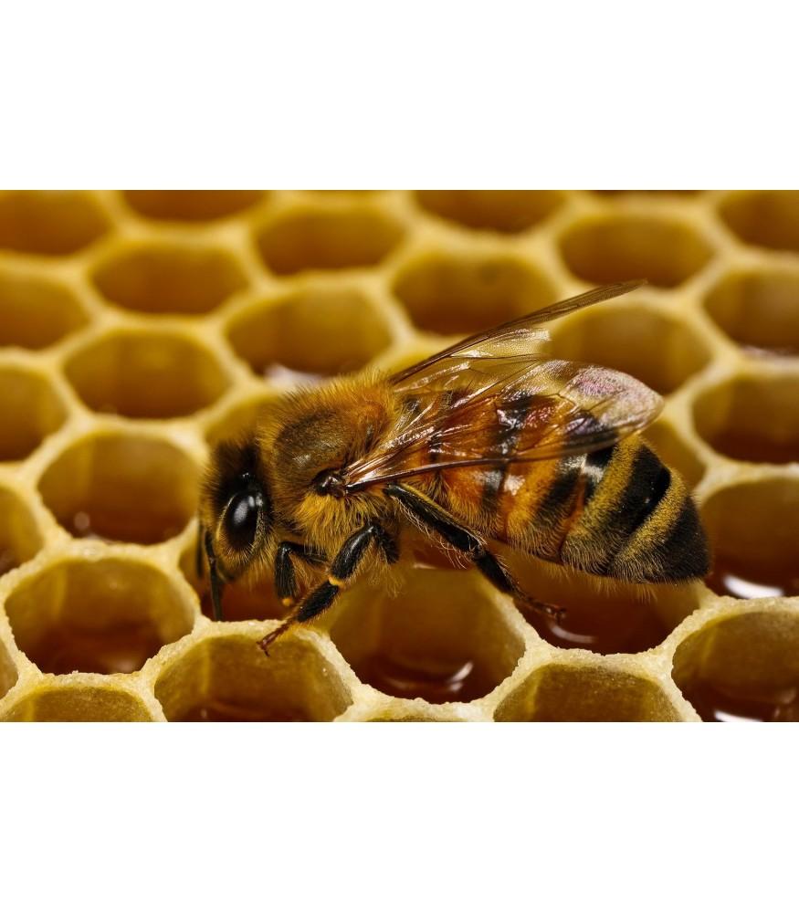 Особенности осиного меда | фазенда рф