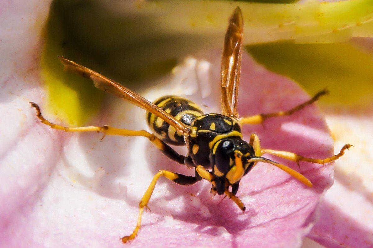 Образ жизни насекомых - какие они бывают и как они живут