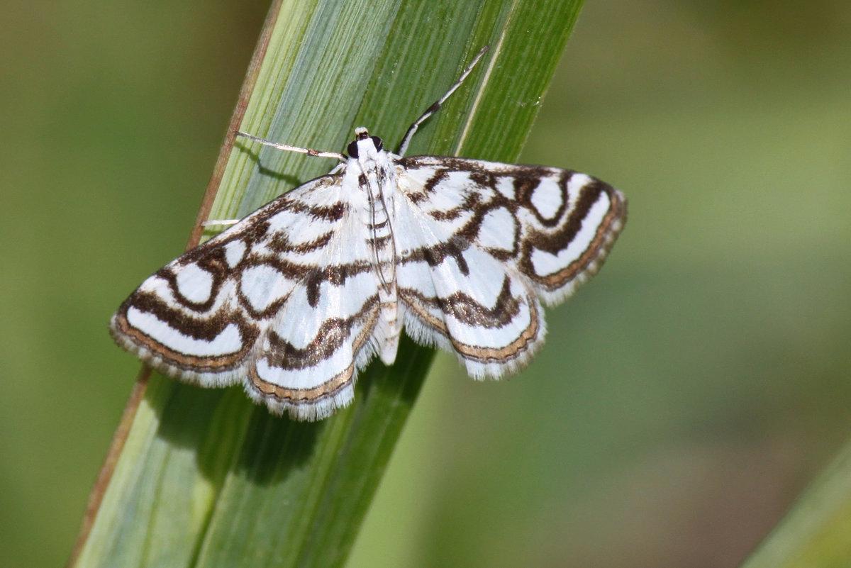 Какие бабочки угрожают вашему урожаю – фото и описания бабочек-вредителей – дачные дела