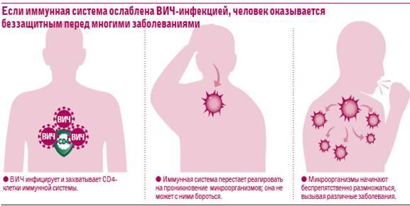 Могут ли комары переносит спид – вич и спид