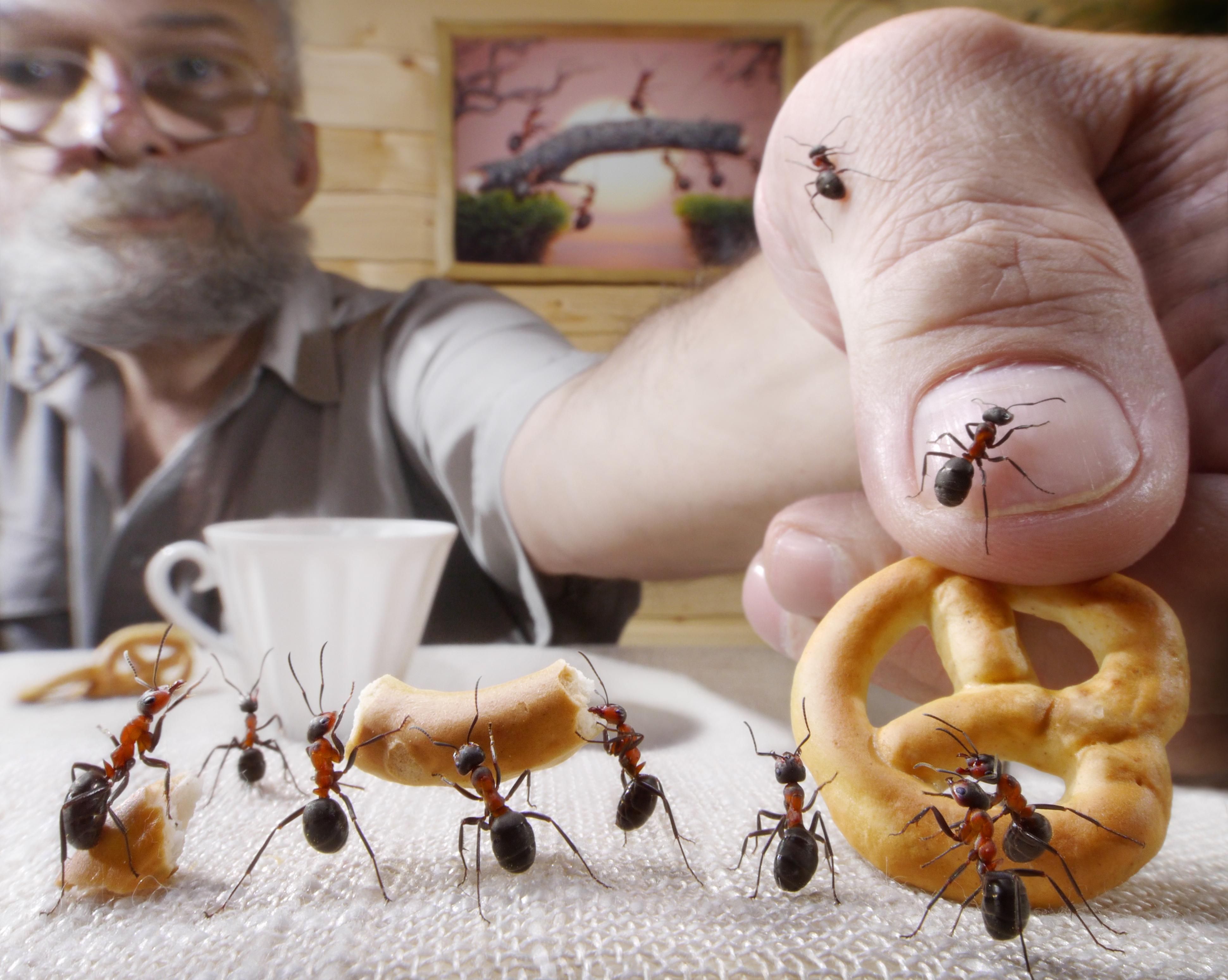 Какие растения боятся муравьи - самые эффективные травы, пряности для отпугивания насекомых